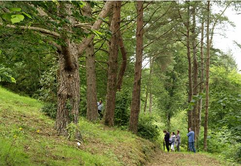 illu-assocation-amis-arbres