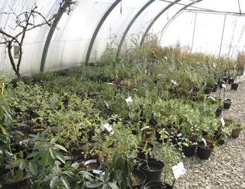 Les serres nous permettent de préparer en toute saison les plants et boutures.