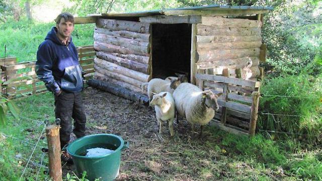 Des moutons jouent les tondeuses écolo à l'arboretum