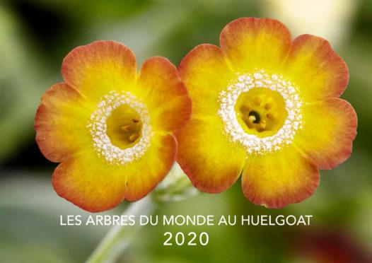 Les calendriers 2020 sont disponibles !